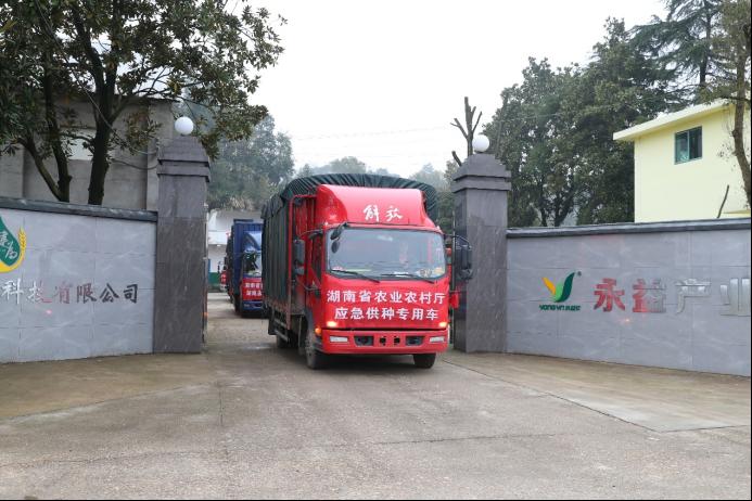 """2021年湖南""""春耕""""动用330万公斤早稻储备种子!"""