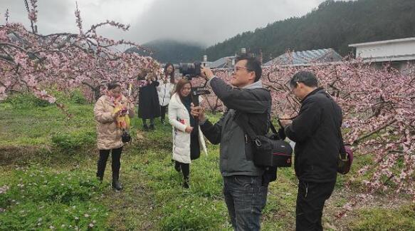 2021年3月桃花节,炎陵黄桃预售700万斤!
