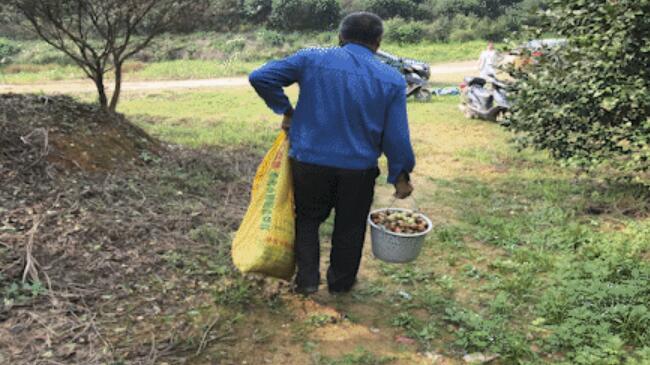 平江特产东山油茶被乱采,基地负责人报警!