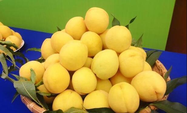 2021年炎陵黄桃的种植规模,多少亩?